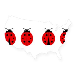 Ladybugs Rectangle USA Sticker