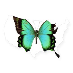 Green Butterfly Rectangle USA Sticker
